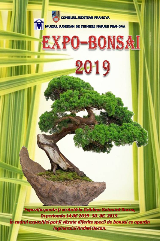 Expo-Bonsai 2019 image